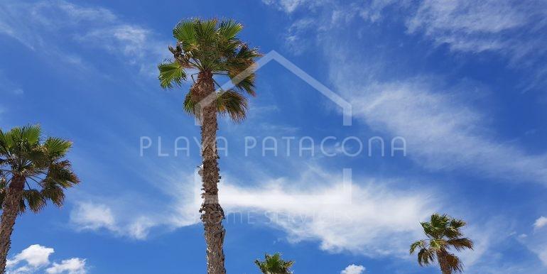 palmeras patacona